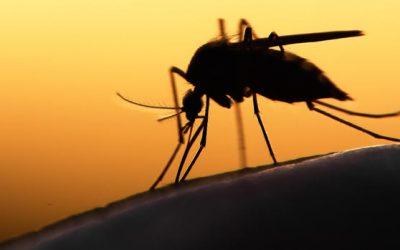 Chiapas de los estados con más casos de Zika